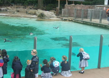 A trip to the zoo for Year 1