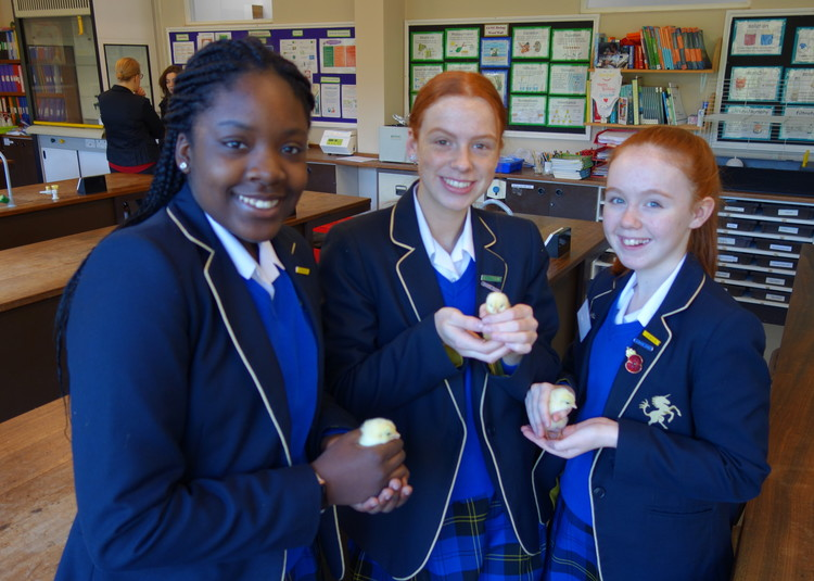 Egg-citing Times in Science