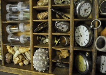 The Cabinet of Oddities & Curiosities