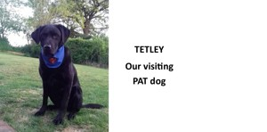 Tetley our visiting pat dog 2