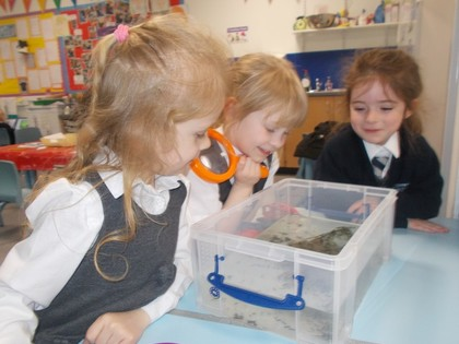 Tadpoles teach children about life cycles