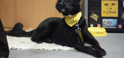Reward and Intervention Programme with the Dogs Trust