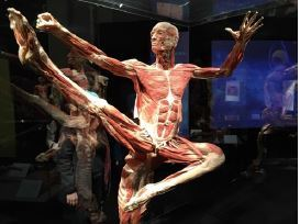 Body world 3